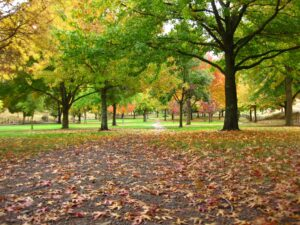 Park in autumn | explore-nature | positivity-during-difficult-times |